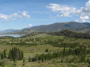 In the wake of the Hayman Fire, mountain pine beetles caused significant mortality in Summit County, up to 95 percent in some stands. Credit: U.S. Forest Service